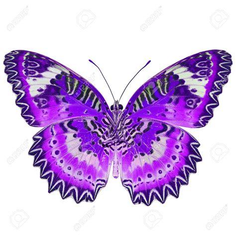 imagenes mariposas libres mariposas moradas im 225 genes de archivo vectores mariposas