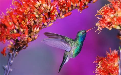 wallpaper flower and birds wallpaper birds and flowers 61 images