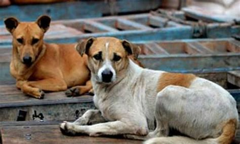 low blood sugar in puppies dogs can sniff out low blood sugar study everylifecounts ndtv