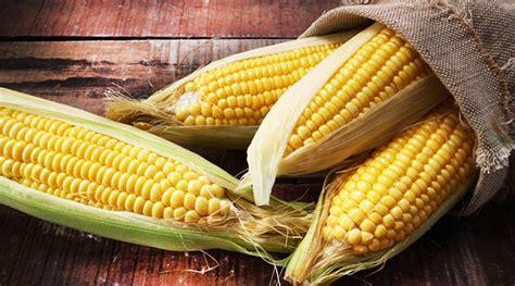 manfaat jagung rebus bagi ibu hamil prenagen