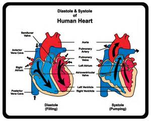 What is the difference between systolic and diastolic blood pressure