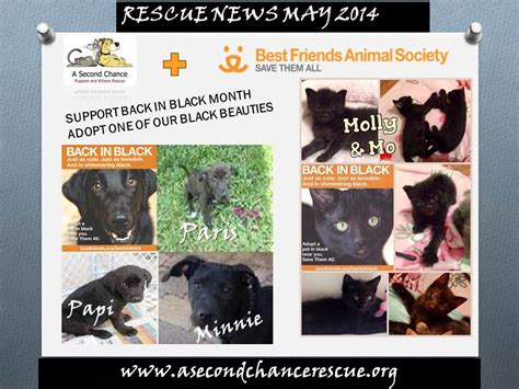a second chance puppies and kittens rescue welcome to a second chance puppies and kittens rescue
