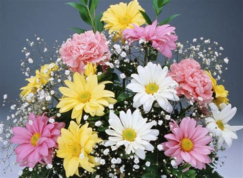Beautifull Flower Lq beautiful flowers wallpapers 2017 new collection find quotes beautiful photos wallpapers