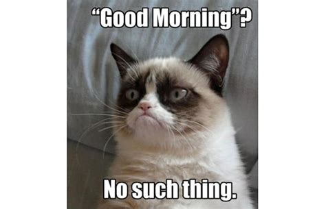 Make A Grumpy Cat Meme - 31 great grumpy cat memes that will make you less grumpy