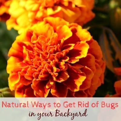 get rid of bugs in backyard summer care tip natural ways to get rid of bugs in your