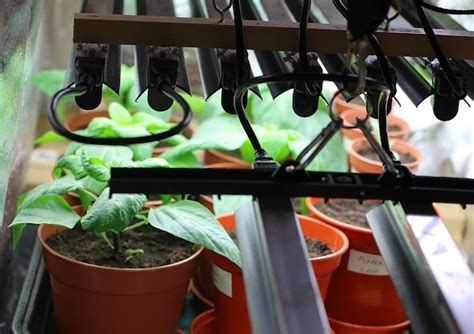 diy indoor grow light inexpensive   growing