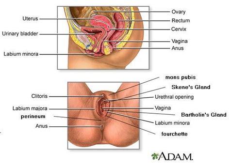sexual diagram reproductive system nursing crib