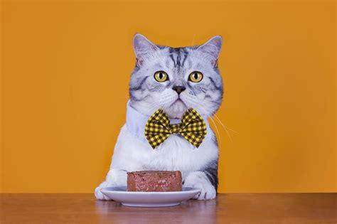 Calendar Deal Groupon Cat Calendar