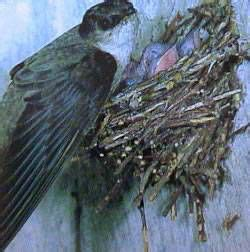 How To Get Bird Out Of Fireplace by Birds Don T Belong In Chimneys Littleton Co Mountain