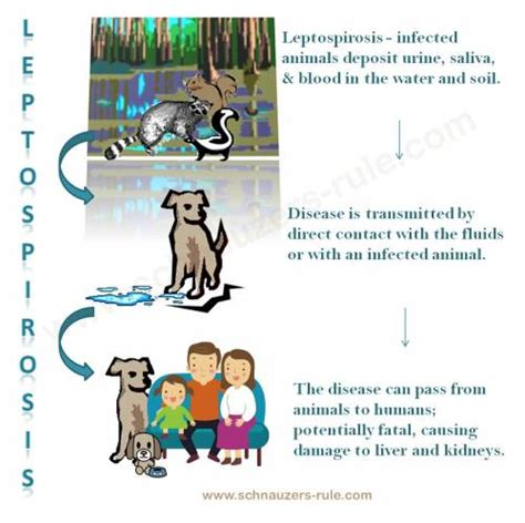 lepto in dogs leptospirosis in dogs