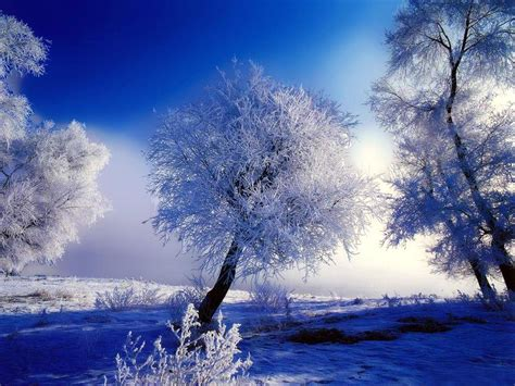 beautiful winter nature winter wallpaper beautiful nature winter
