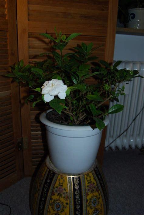 growing aromatic houseplants indoor plants  smell good
