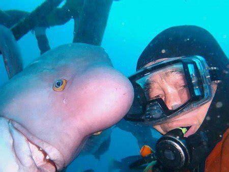 buzo y pez mantienen amistad por 25 a 241 os im 225 genes taringa