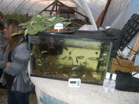 Fish Tank Vegetable Garden 49 Best Images About Aquaponics On Vertical