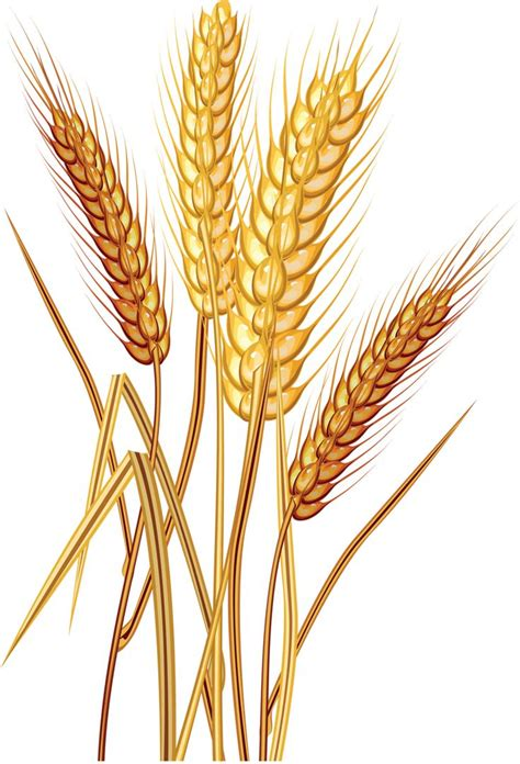 whole grains clipart wheat clipart wheat leave pencil and in color wheat