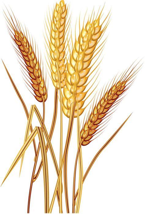 wheat clip grain clipart wheat farm pencil and in color grain