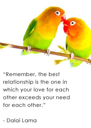 quotes about love and birds quotesgram love bird quotes and sayings quotesgram
