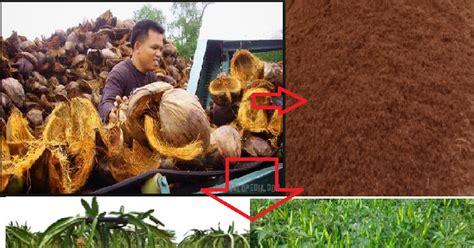 Pupuk Kalsium Organik inilah proses pembuatan pupuk organik dari sabut kelapa