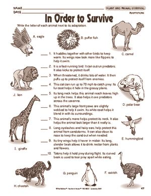 results for animal adaptations worksheet guest the
