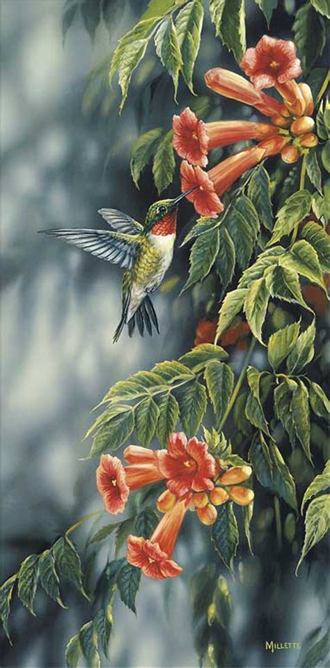 ruby rosemary rosemary millette handsigned numbered limited edition print quot summer ruby hummingbird