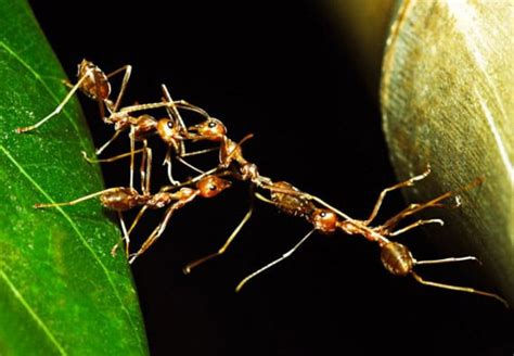 rid  outdoor ants updated