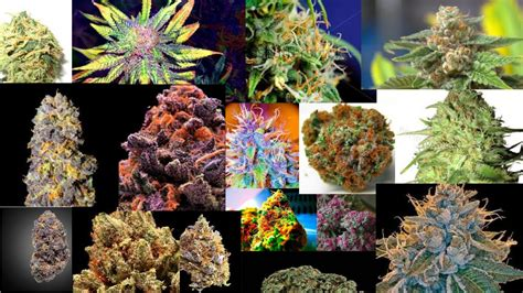 marijuana cannabis the best colors of cannabis compilation