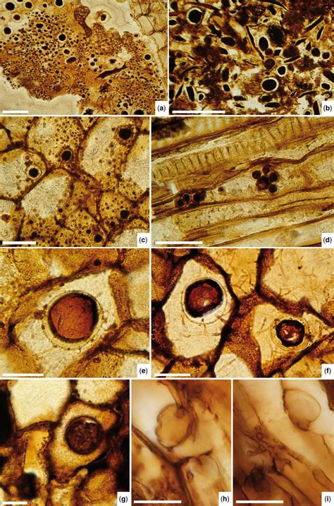 peat colour meaning biota and palaeoenvironment of a high middle latitude late triassic peat forming ecosystem from
