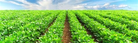 lotus export lotus export offers fertilisers tobacco suckericides