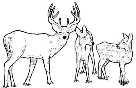 deer family coloring page deer familys colouring pages