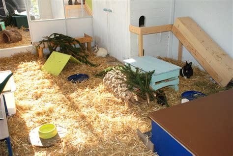 meerschweinchen auslauf wohnung kaninchen
