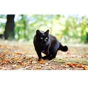Black Cat  HD Desktop Wallpapers 4k