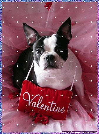 valentines day animals 17 best images about s day pets on