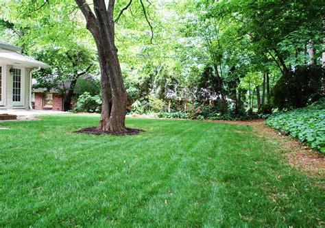 a backyard growing grass in atlanta carson matthews blog