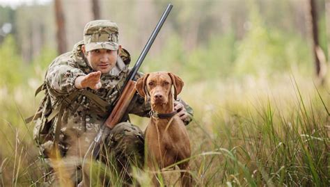 how to gun dogs 30 most useful best gun supplies for hunters with dogs