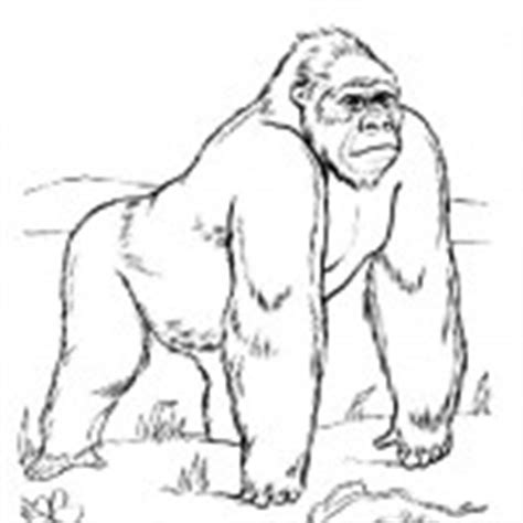 gorilla family coloring page monkeys coloring pages