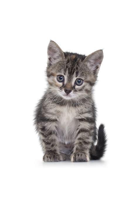 1452138923 how to be a cat apprivoiser un chaton peureux arriv 233 e du chat