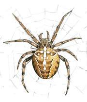 White Garden Spider Uk The Rspb A To Z Of A Wildlife Garden Garden Spider