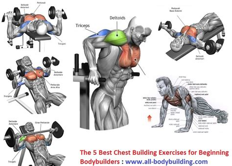 is bench press the best chest exercise the 5 best chest building exercises for beginning bodybuilders all bodybuilding com