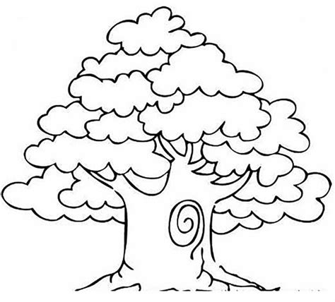 1000 images about trees coloring pages on pinterest mango