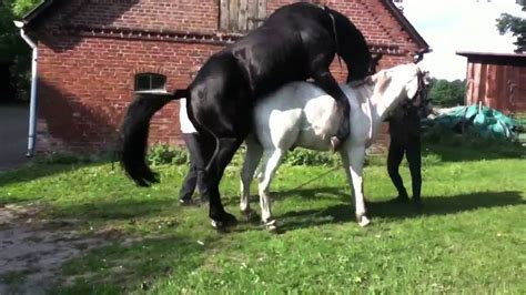 horse mating with human www pixshark com images