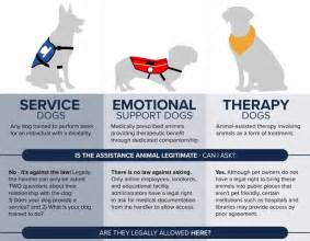 I Need A New Bed infographic is that a real service dog orvis news