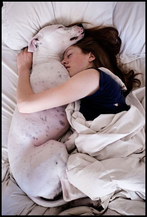 bed for cuddling our gentle giants 187 10 reasons why your gentle giant