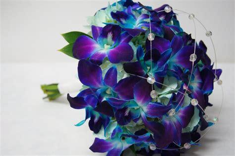 Blue Dendrobium Facebook Blue Color