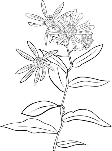 mature flower diagram clip art at clkercom vector clip drawing of aster conspicuus clip art at clker com vector
