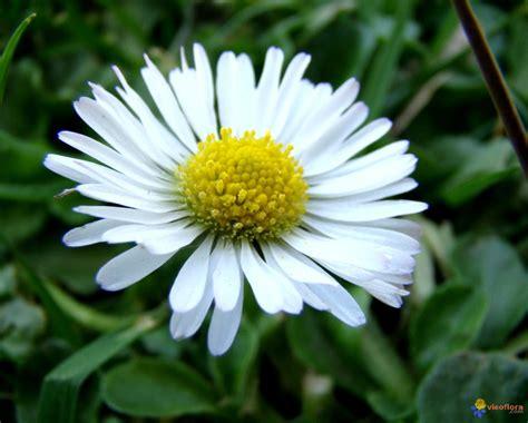Fleurs De Printemps by Photo Mes Premi 232 Res Fleurs Du Printemps 5