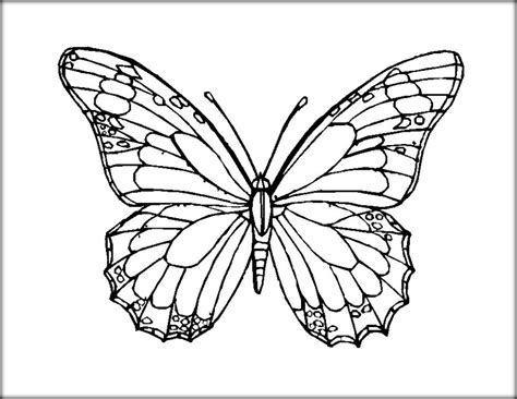 Beautiful Butterfly Coloring Pages For Preschool Color Zini
