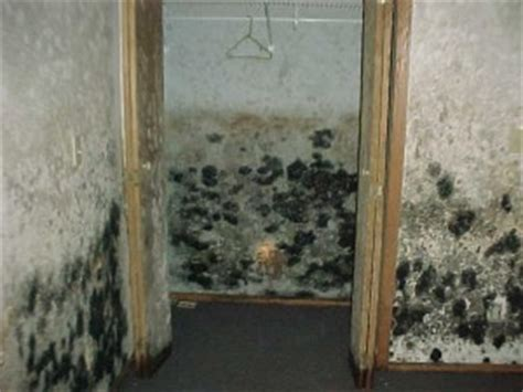 how to get rid of black mold in basement black mold