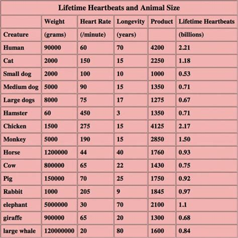 how long should a tortoise heat l be on lifetime heartbeats for every living creature average up
