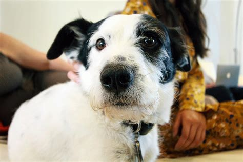 mascotas para un piso las 10 razas de perro que mejor se adaptan a un piso
