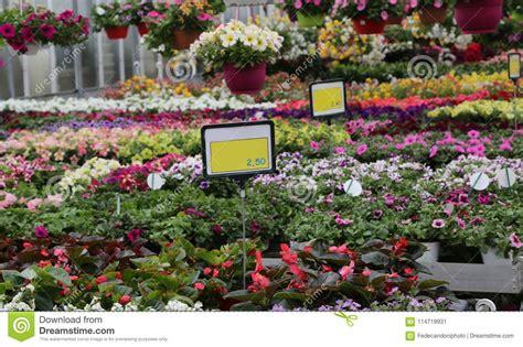 precios de plantas de interior plantas de interior precios stunning derivador interior